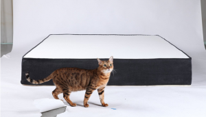 quatro mattress for back pain